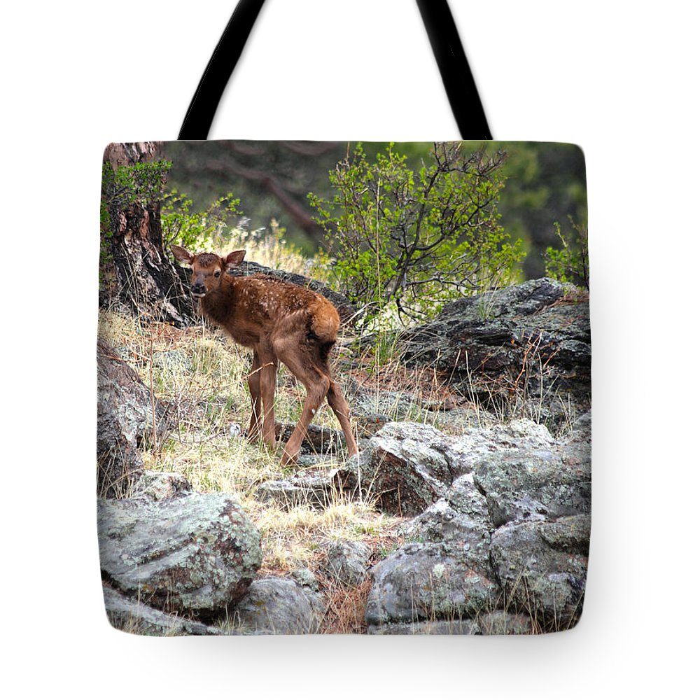 Elk Tote Bag featuring the photograph Newborn Elk Calf by Shane Bechler