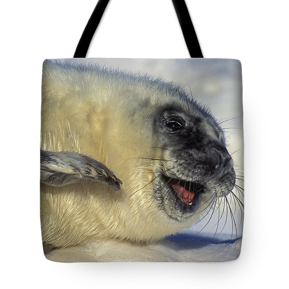 Light Tote Bag featuring the photograph Newborn Gray Seal Pup Halichoerus by Thomas Kitchin & Victoria Hurst