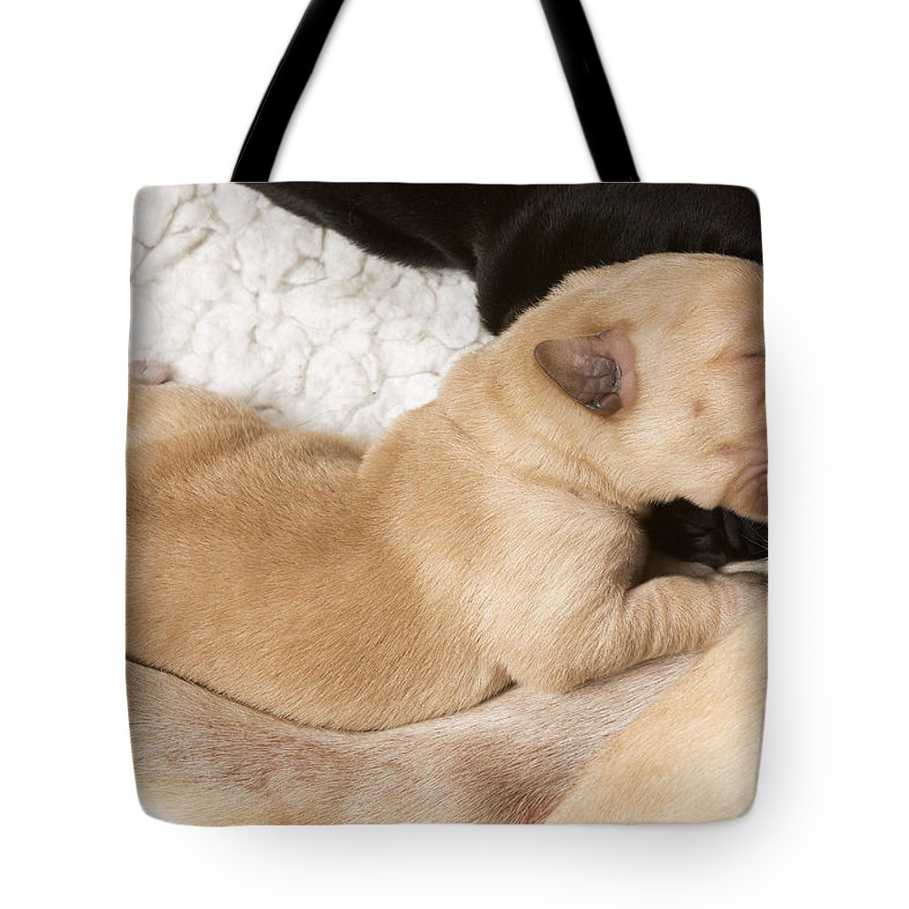 Labrador Retriever Tote Bag featuring the photograph Newborn Labrador Puppy Suckling by Jean-Michel Labat