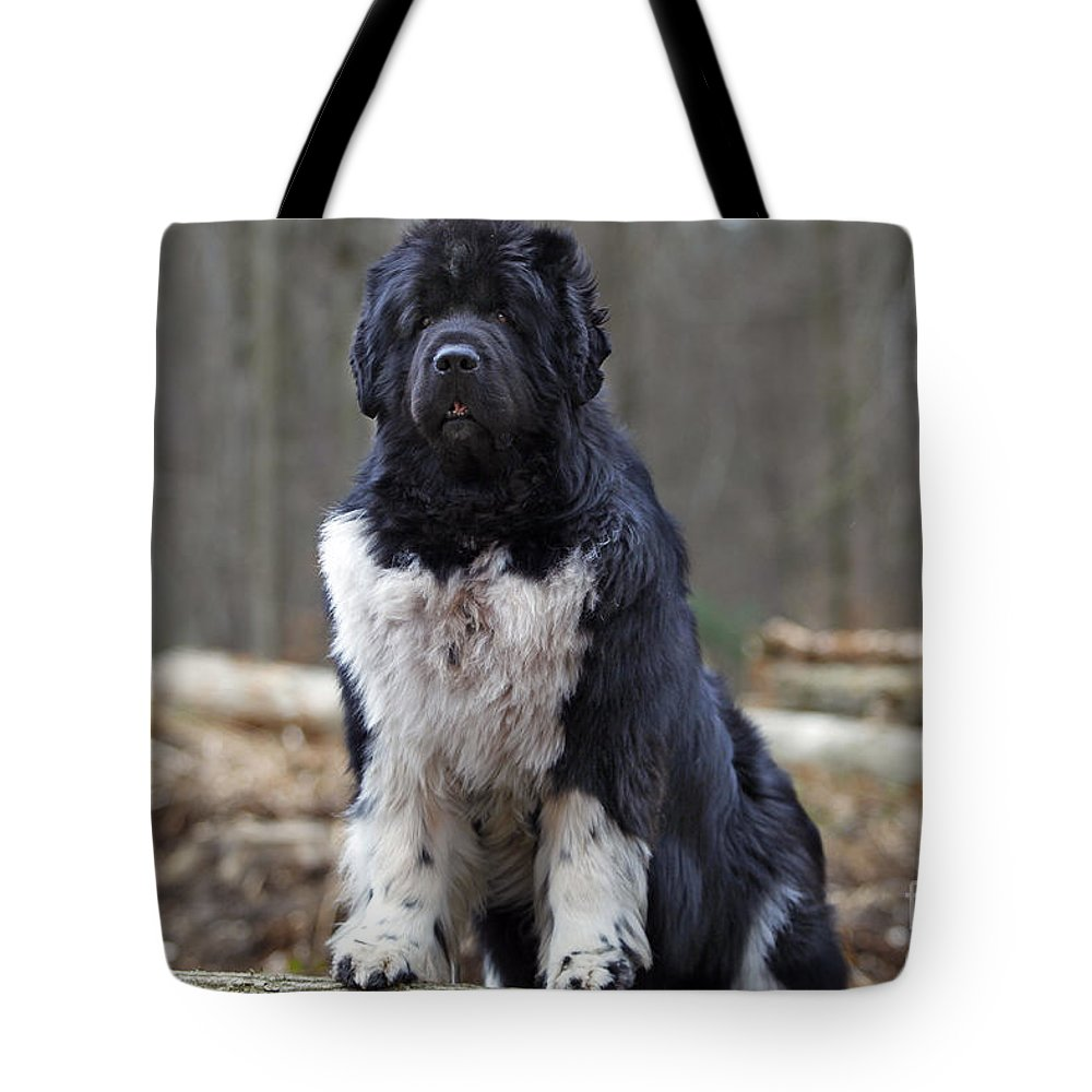 Newfoundland Tote Bag featuring the photograph Newfoundland Dog by Jean-Michel Labat