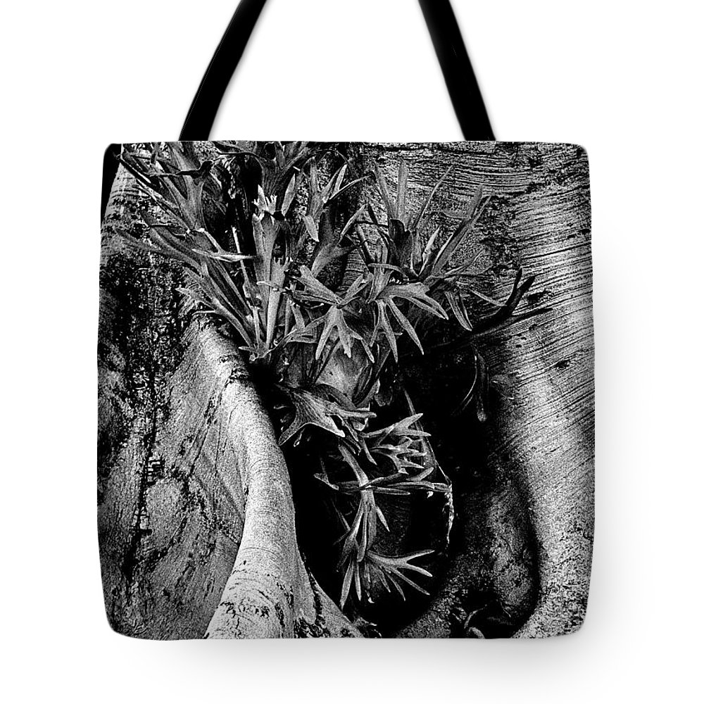 Tree Tote Bag featuring the photograph Next Generation by Paul W Faust - Impressions of Light