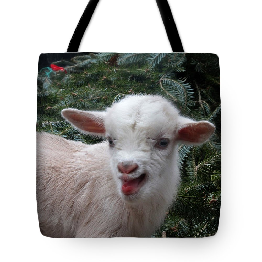 Nigerian Baby Goat Tote Bag featuring the photograph Nigerian Baby Goat 3 Of 8 by Dwight Cook