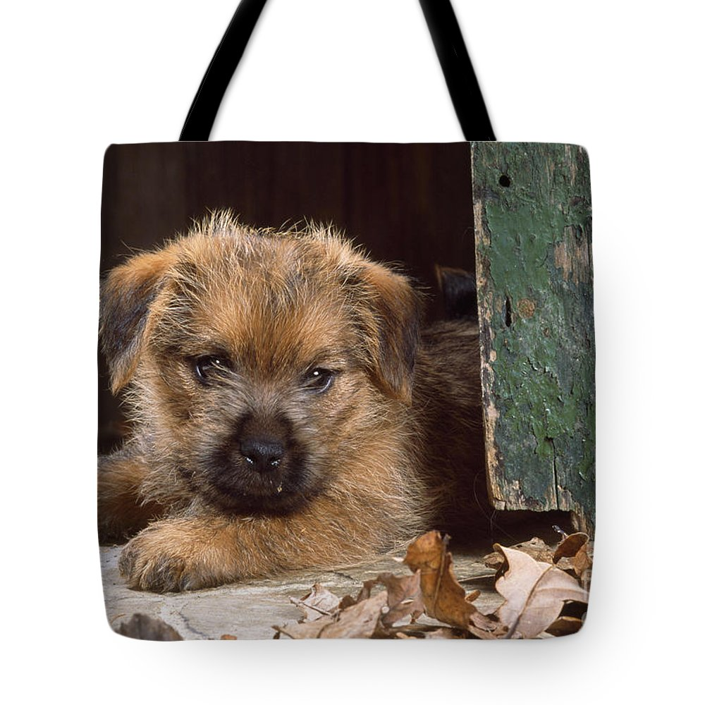 Norfolk Terrier Tote Bag featuring the photograph Norfolk Terrier Puppy By Barn Door by John Daniels