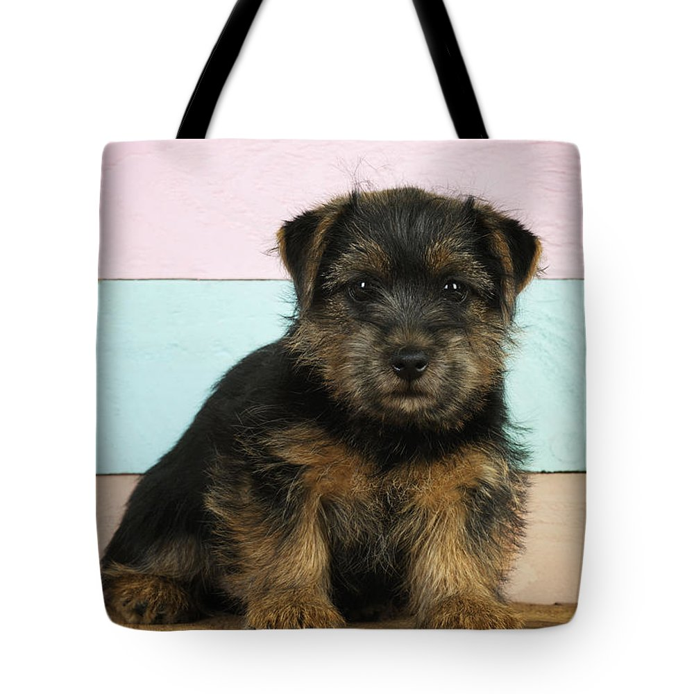 Norfolk Terrier Tote Bag featuring the photograph Norfolk Terrier Puppy Dog, Sitting by John Daniels