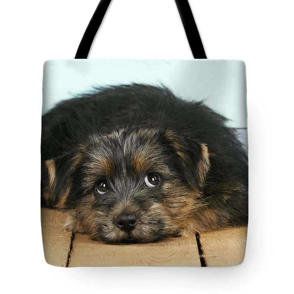 Norfolk Terrier Tote Bag featuring the photograph Norfolk Terrier Puppy by John Daniels