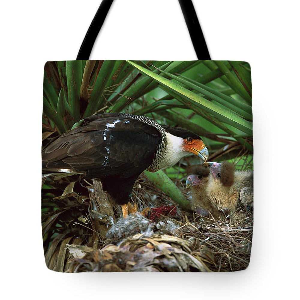 Caracara Cheriway Tote Bag featuring the photograph Northern Caracara Feeding Chicks by Tom Vezo