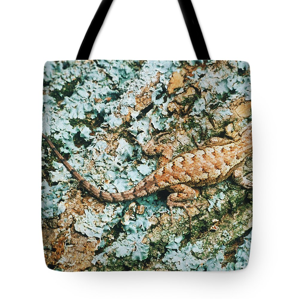 Northern Fence Lizard Tote Bag featuring the photograph Northern Fence Lizard by David N. Davis