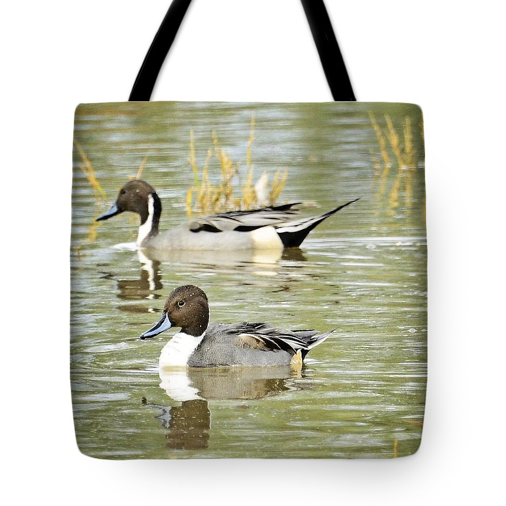 Northern Pintail Duck Tote Bag featuring the photograph Northern Pintail Ducks by Saija Lehtonen