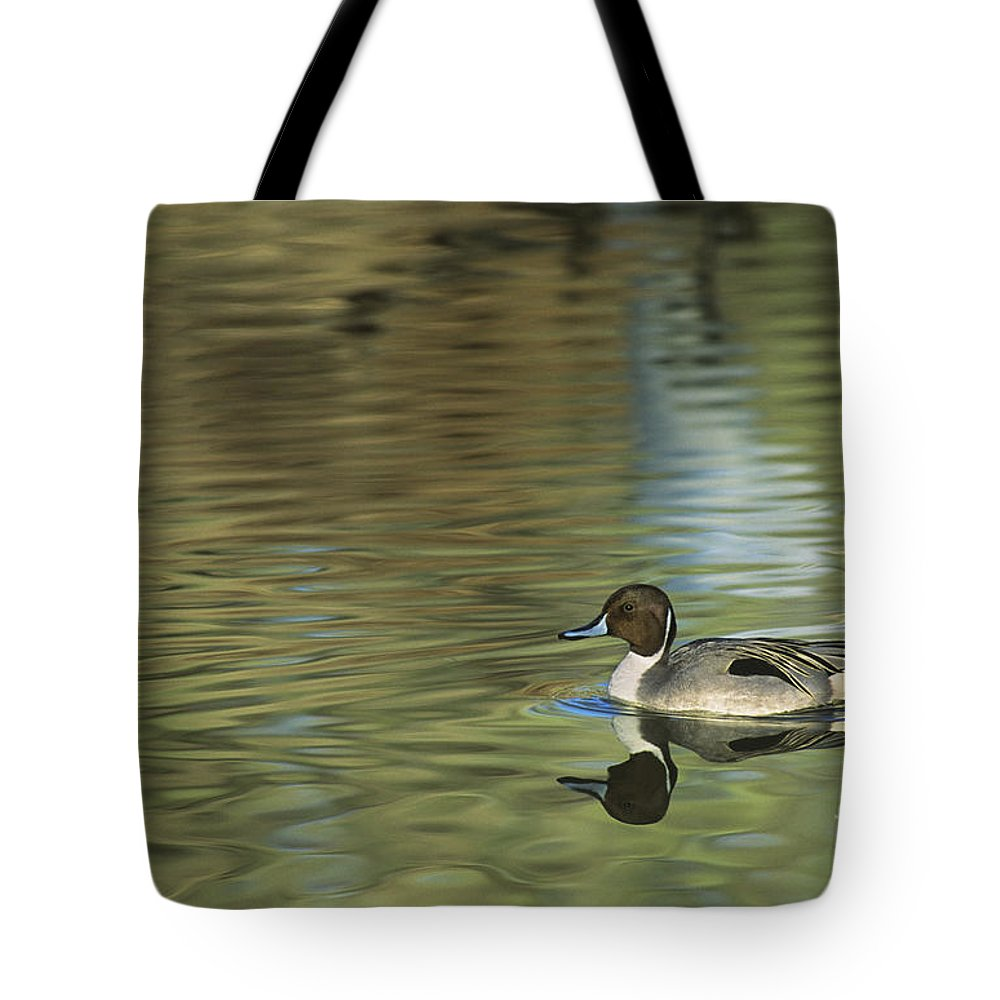 North America Tote Bag featuring the photograph Northern Pintail In A Quiet Pond California Wildlife by Dave Welling