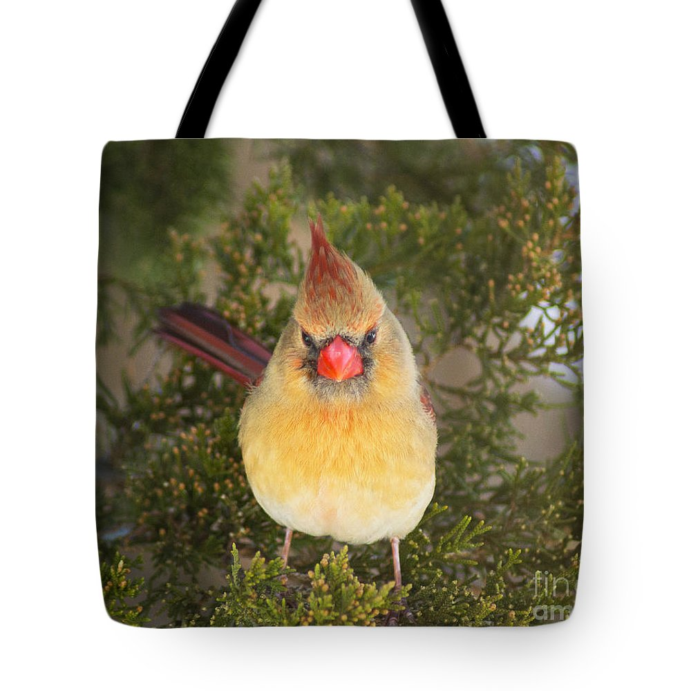 Cardinal Tote Bag featuring the photograph Not-so-angry Bird by Joe Geraci
