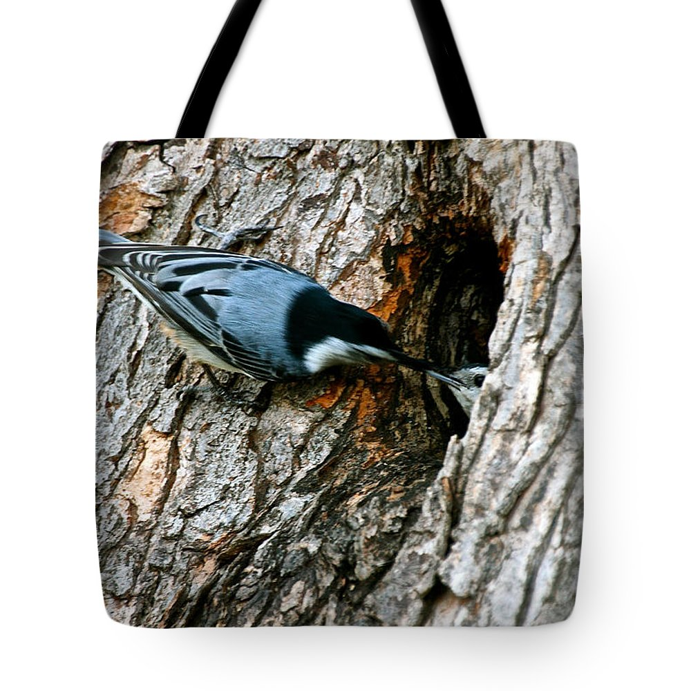 Outdoors Tote Bag featuring the photograph Nuthatch Love by Susan Herber