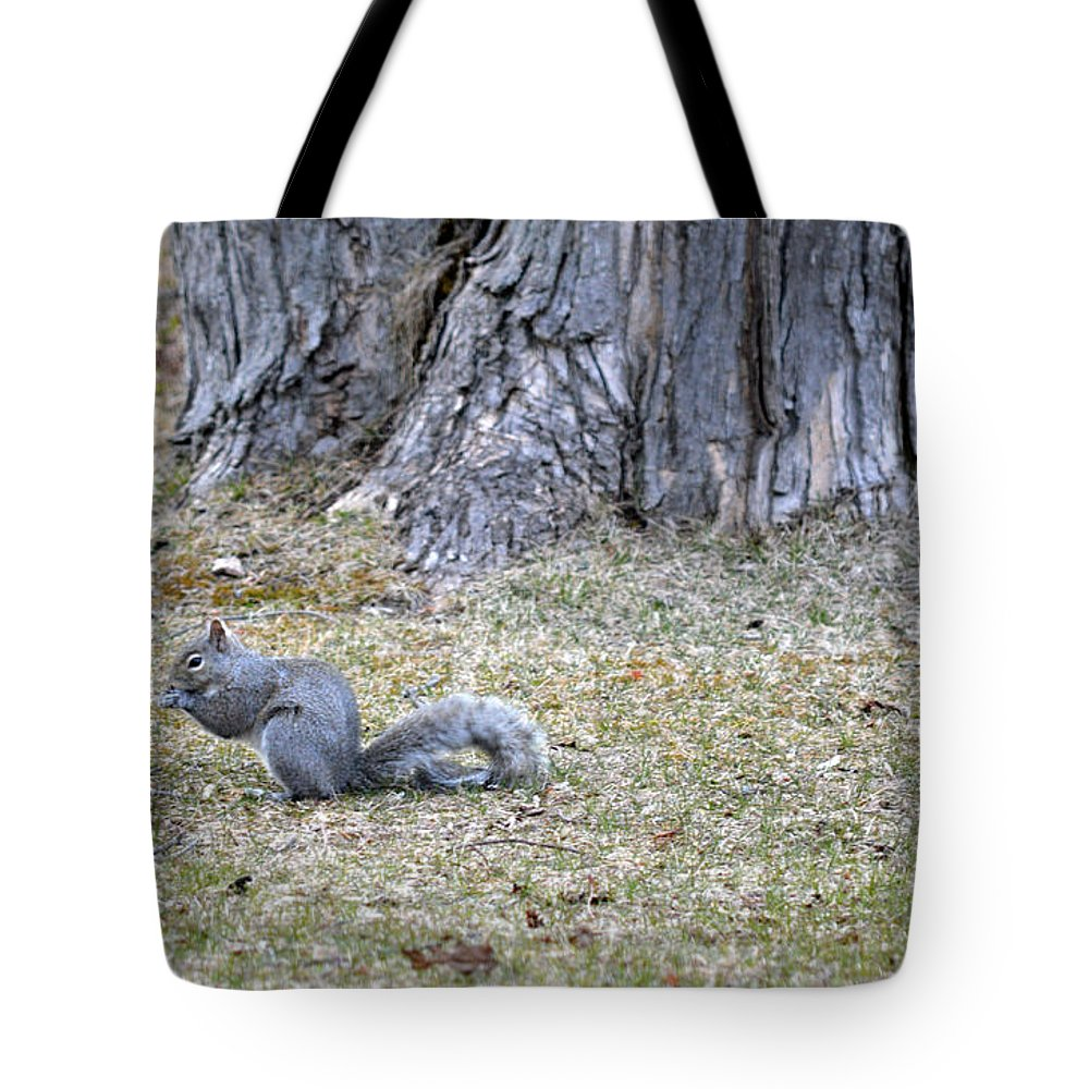 Squirrel Tote Bag featuring the photograph Nutty by Linda Kerkau