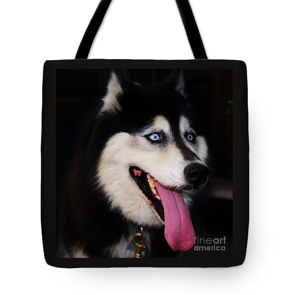 Animal Portrait Art Expressive Blue Eyes Husky Tasha Pet Large Dog Nature Metal Frame Wood Print Canvas Print Poster Print Available On T Shirts Mugs Greeting Cards New Spiral Note Books Tote Bags Phone Cases New Wall Tapestries And Throw Pillows Tote Bag featuring the photograph O M G by Marcus Dagan