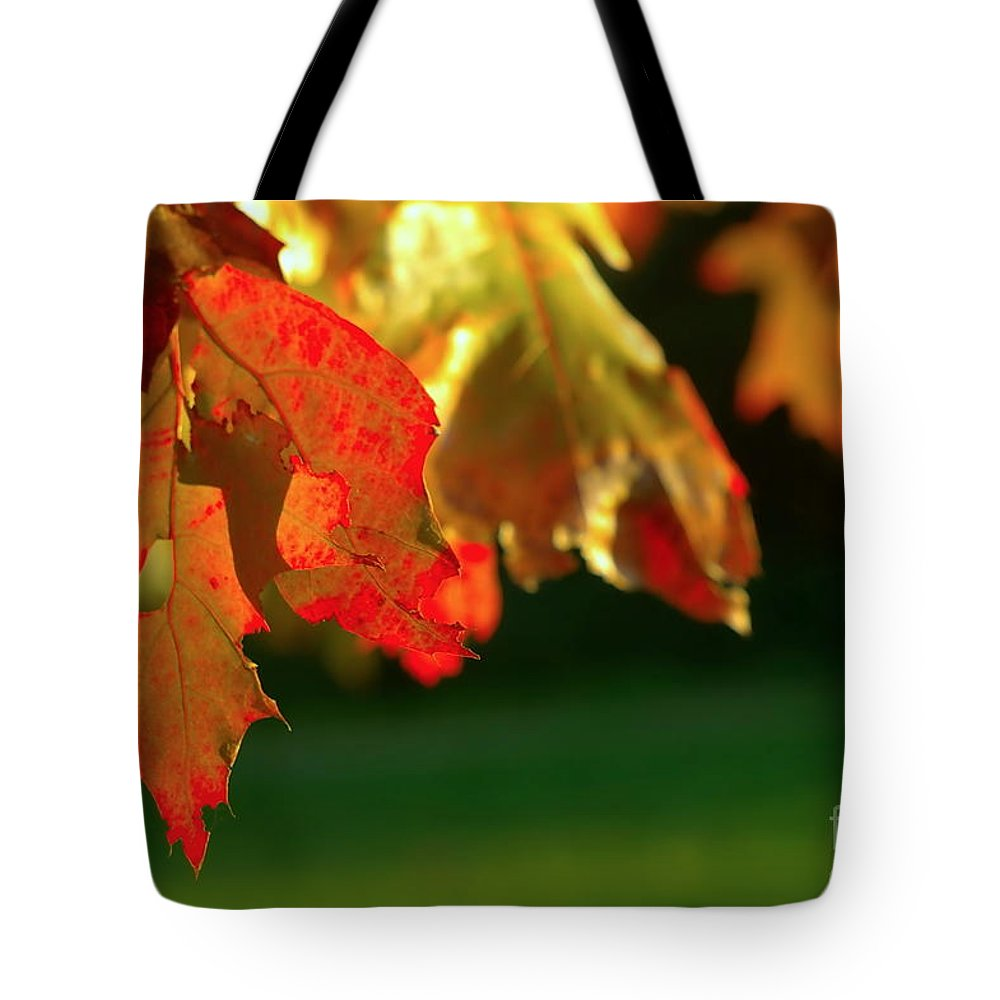 Aged Tote Bag featuring the photograph Oak Leaves by Dariusz Gudowicz