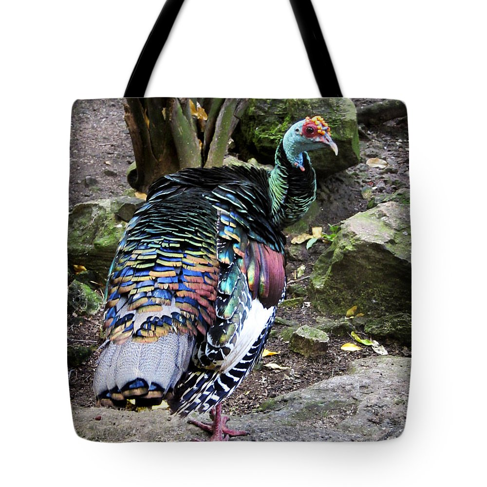 Ocellated Tote Bag featuring the photograph Ocellated Turkey by Marilyn Hunt