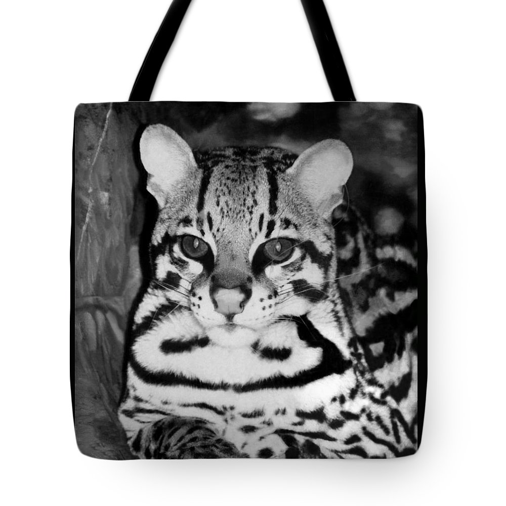 Ocelot In Repose Tote Bag featuring the photograph Ocelot In Repose by Ellen Henneke