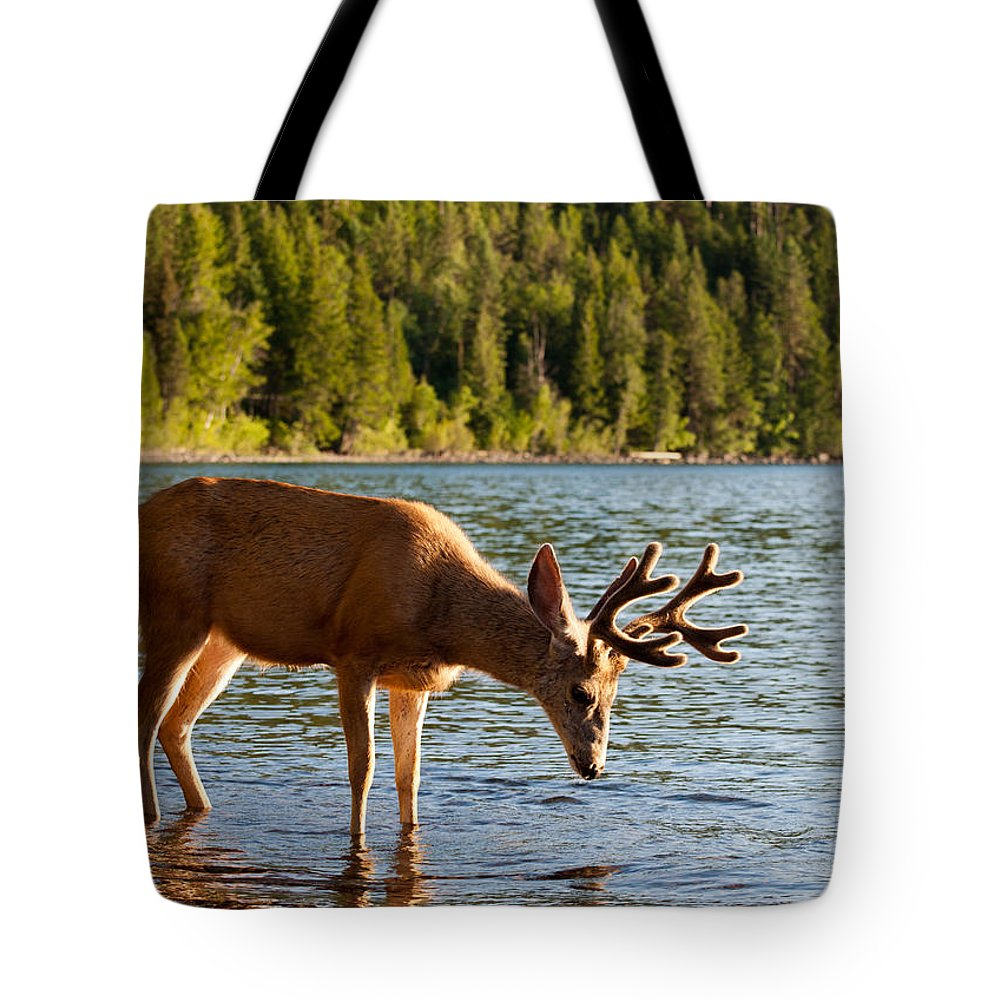 Deer Tote Bag featuring the photograph Oh Deer Is That Me by Bruce Gourley
