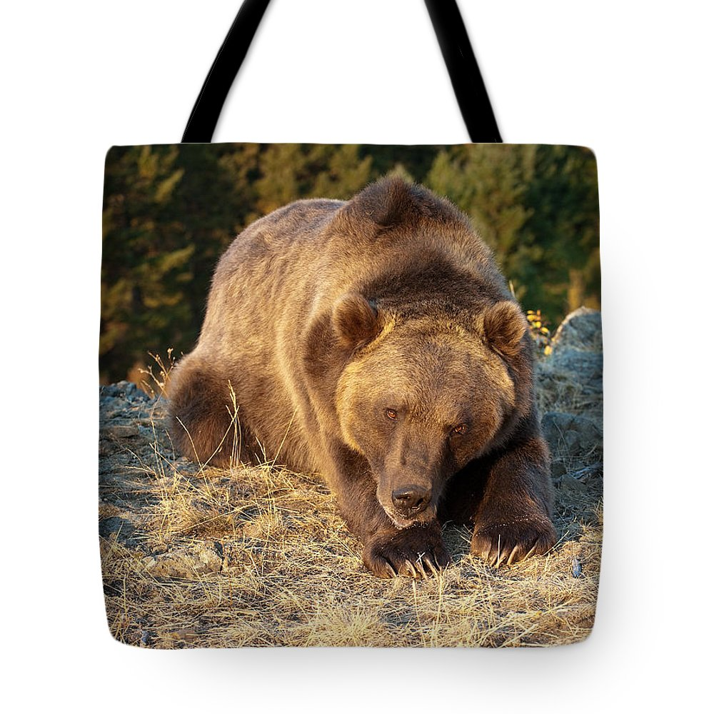 Grizzly Bear Tote Bag featuring the photograph Ok - It's Your Trail by Sandra Bronstein