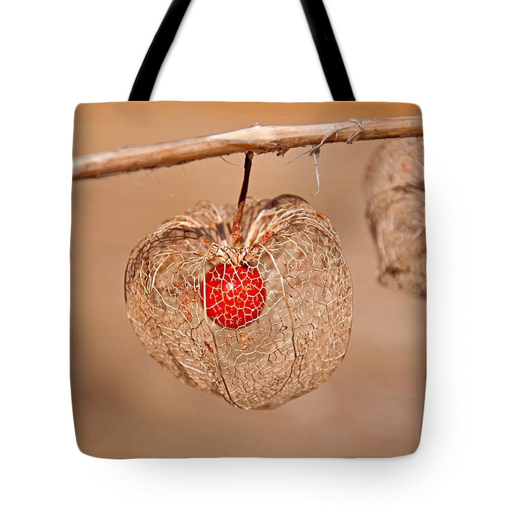 Chinese Lantern Tote Bag featuring the photograph Old Chinese Lantern Pod Art Prints by Valerie Garner