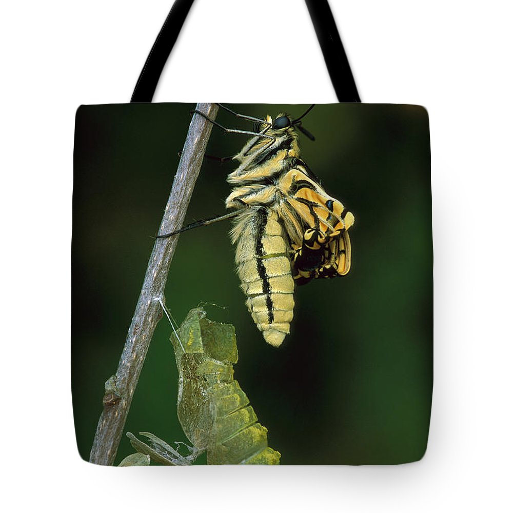 Butterfly Tote Bag featuring the photograph Oldworld Swallowtail Butterfly by Thomas Marent