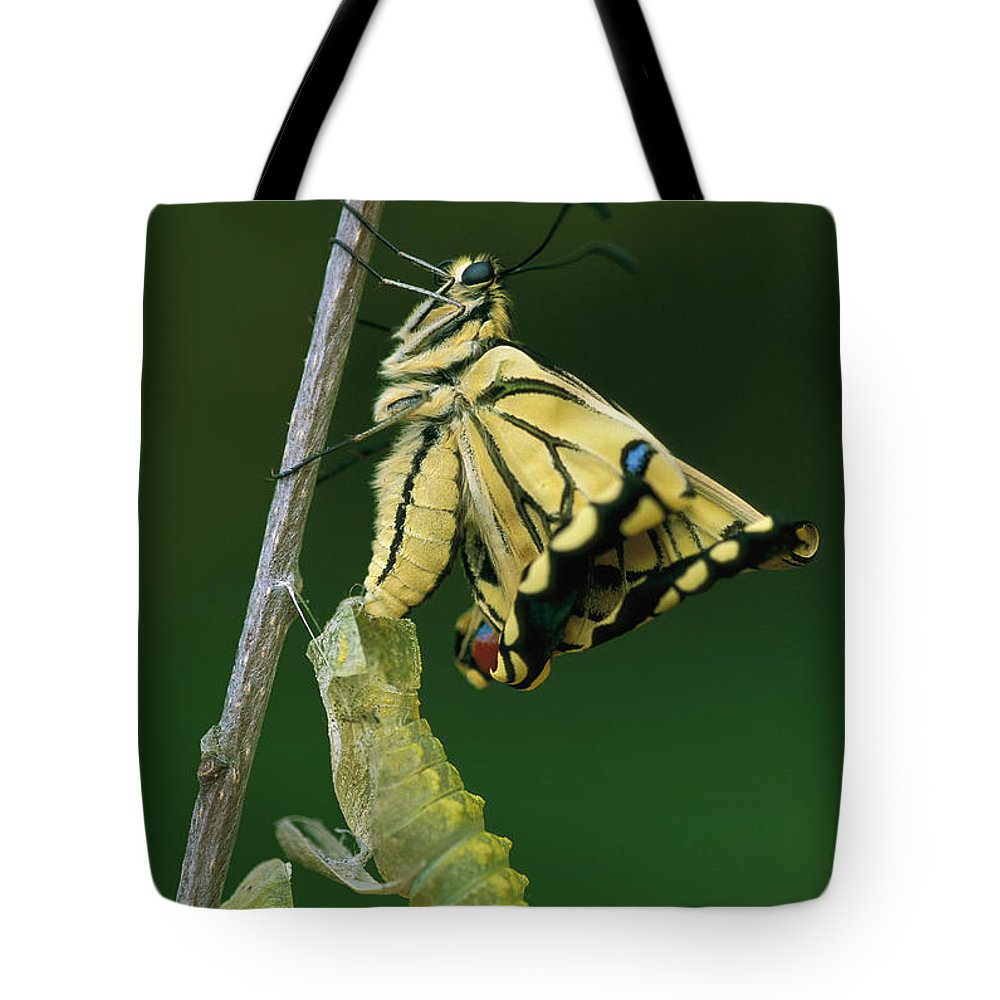 00785210 Tote Bag featuring the photograph Oldworld Swallowtail Emerging by Thomas Marent