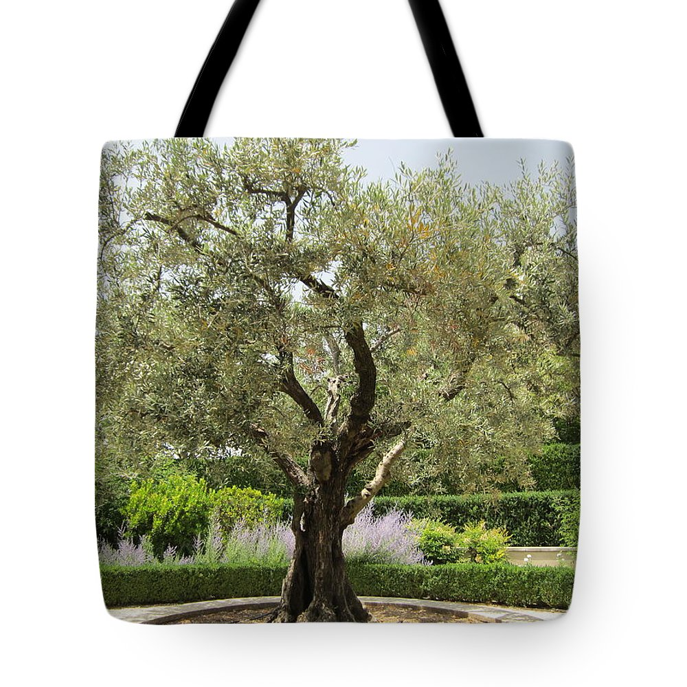 Olive Tote Bag featuring the photograph Olive Tree by Pema Hou