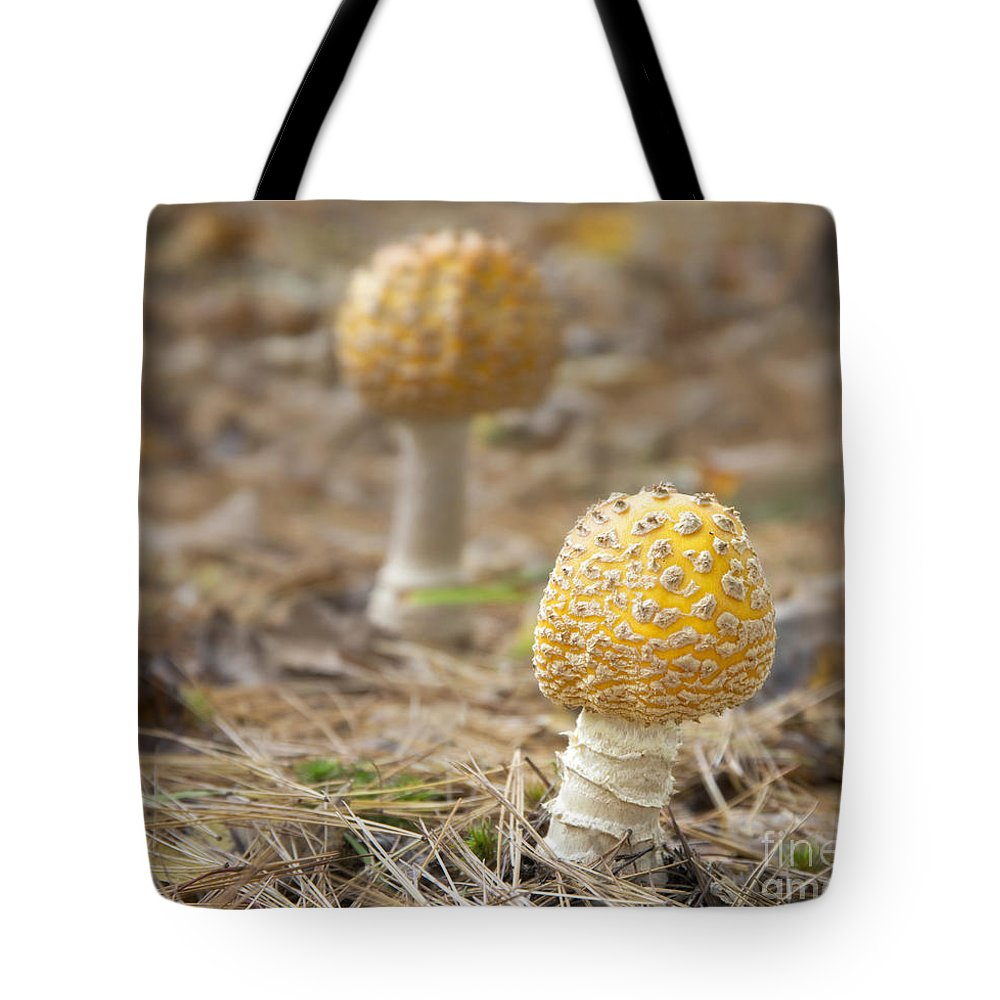 Mushrooms Tote Bag featuring the photograph On The Forest Floor by Claudia Kuhn