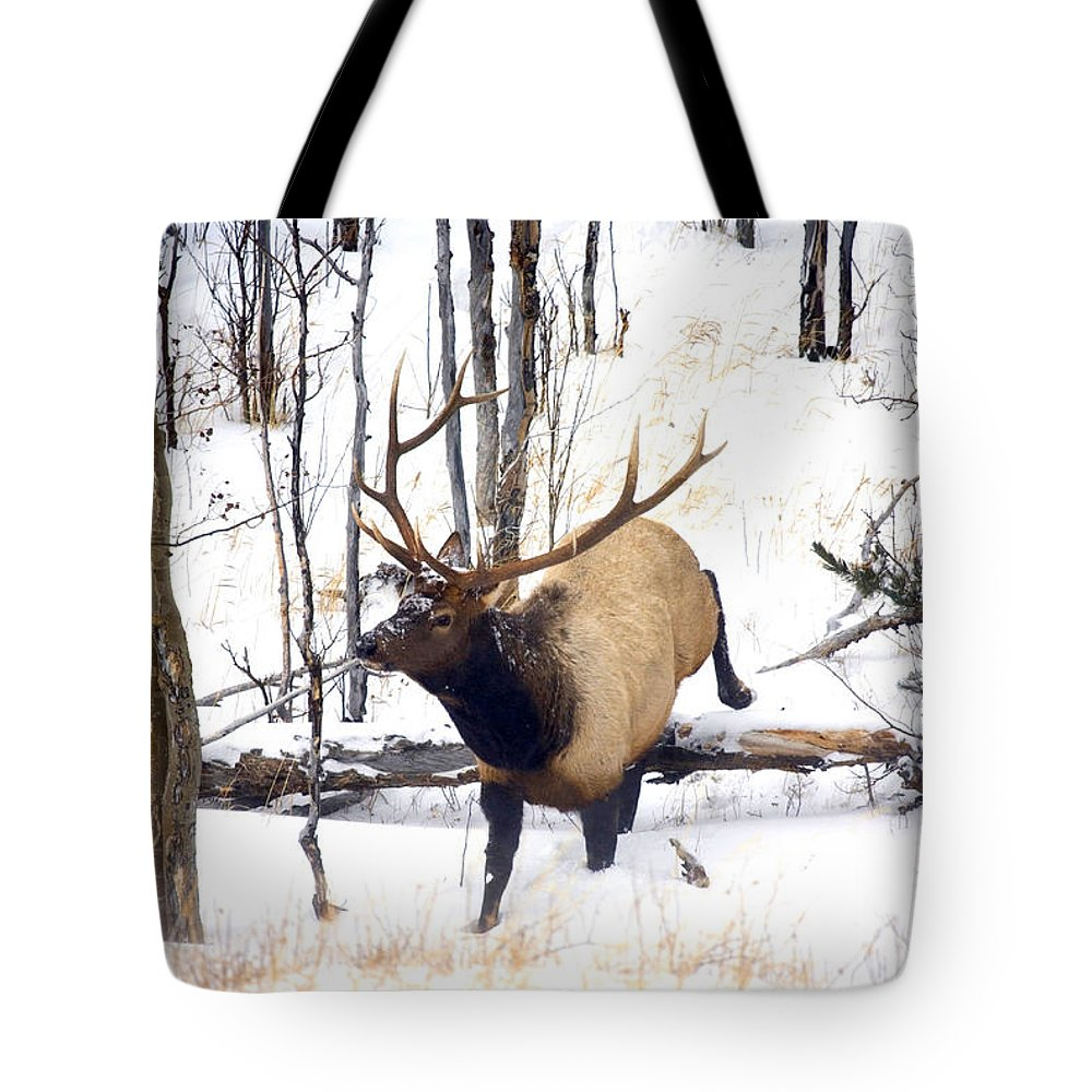 Elk Tote Bag featuring the photograph On the Move by Mike Dawson