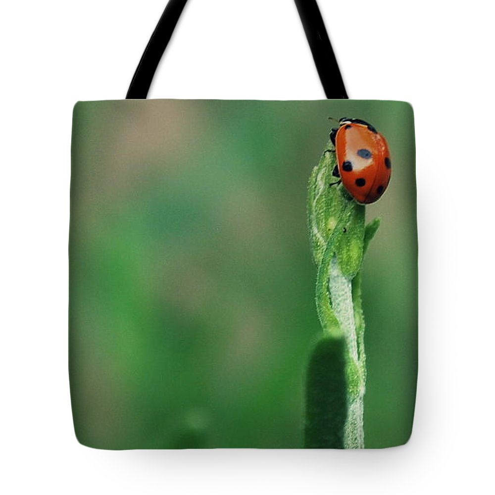 Nature Tote Bag featuring the photograph For Luck by Marija Djedovic