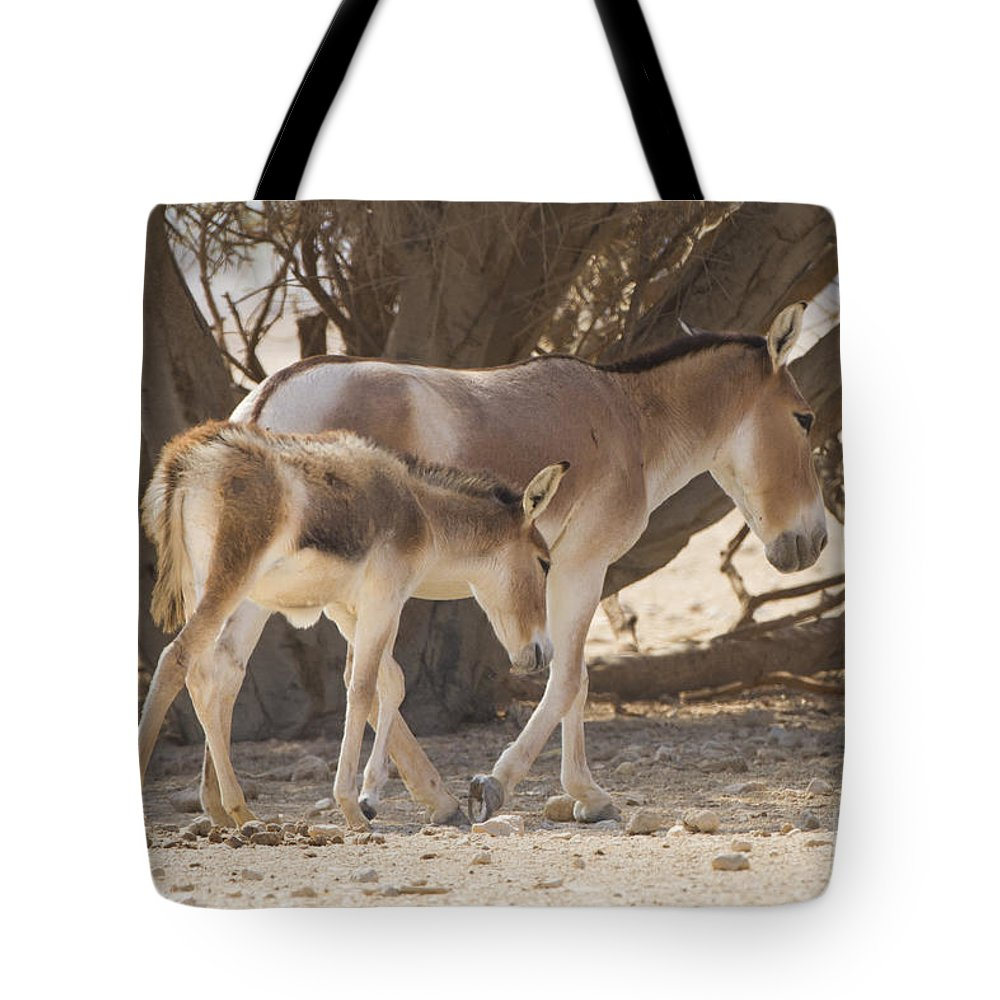 Equus Hemionus Tote Bag featuring the photograph Onager Equus Hemionus 1 by Eyal Bartov