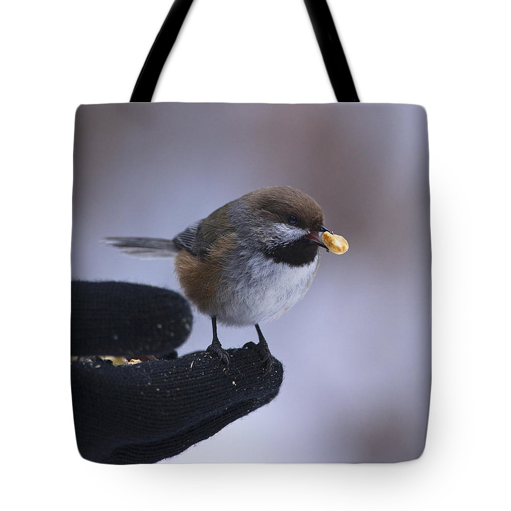 Festblues Tote Bag featuring the photograph One Little Bite... by Nina Stavlund
