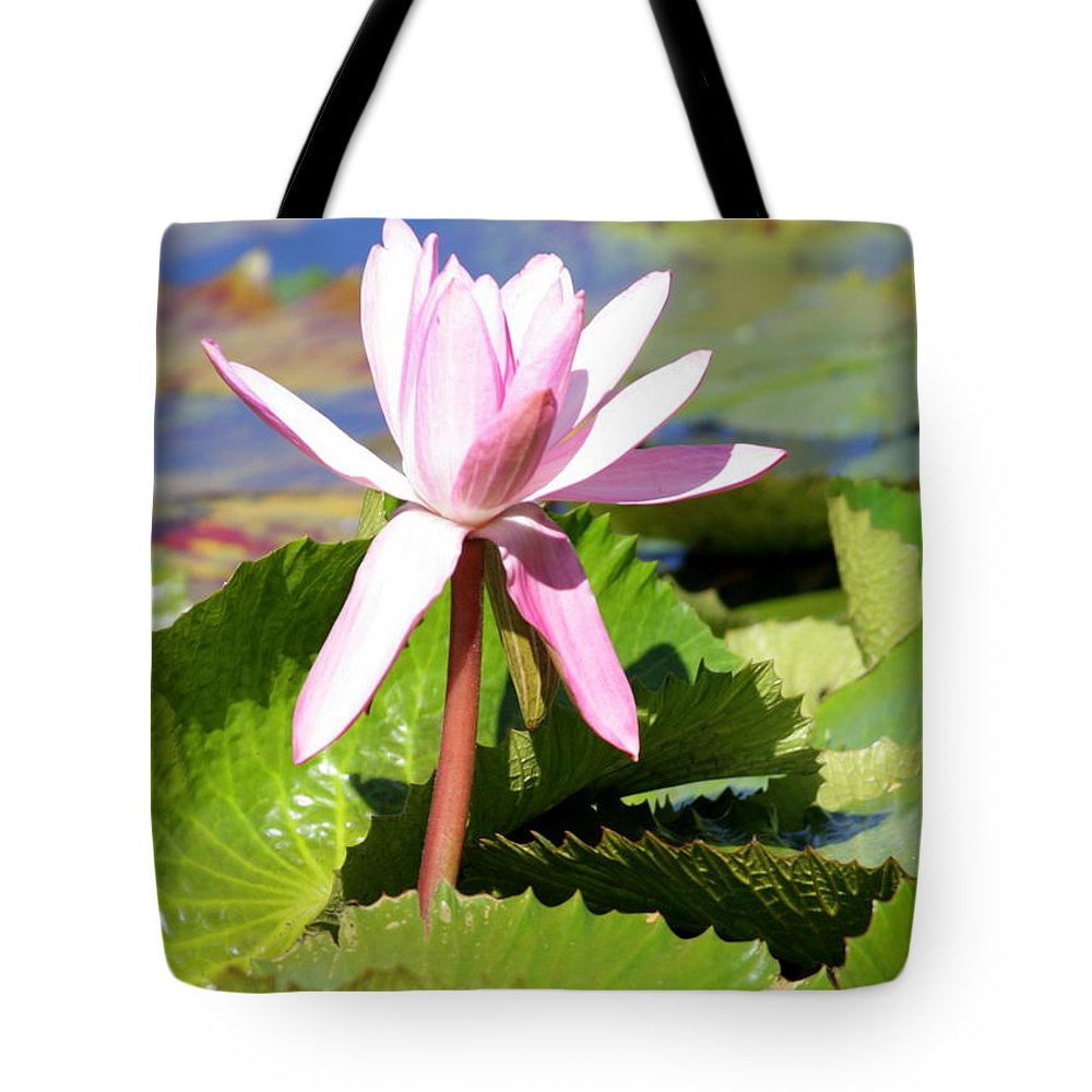 Water Lily Tote Bag featuring the photograph One Pink Water Lily by Carol Groenen