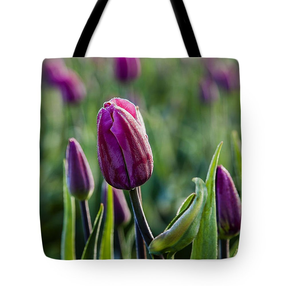 Tulip Tote Bag featuring the photograph One Tulip Among Many by Mary Jo Allen