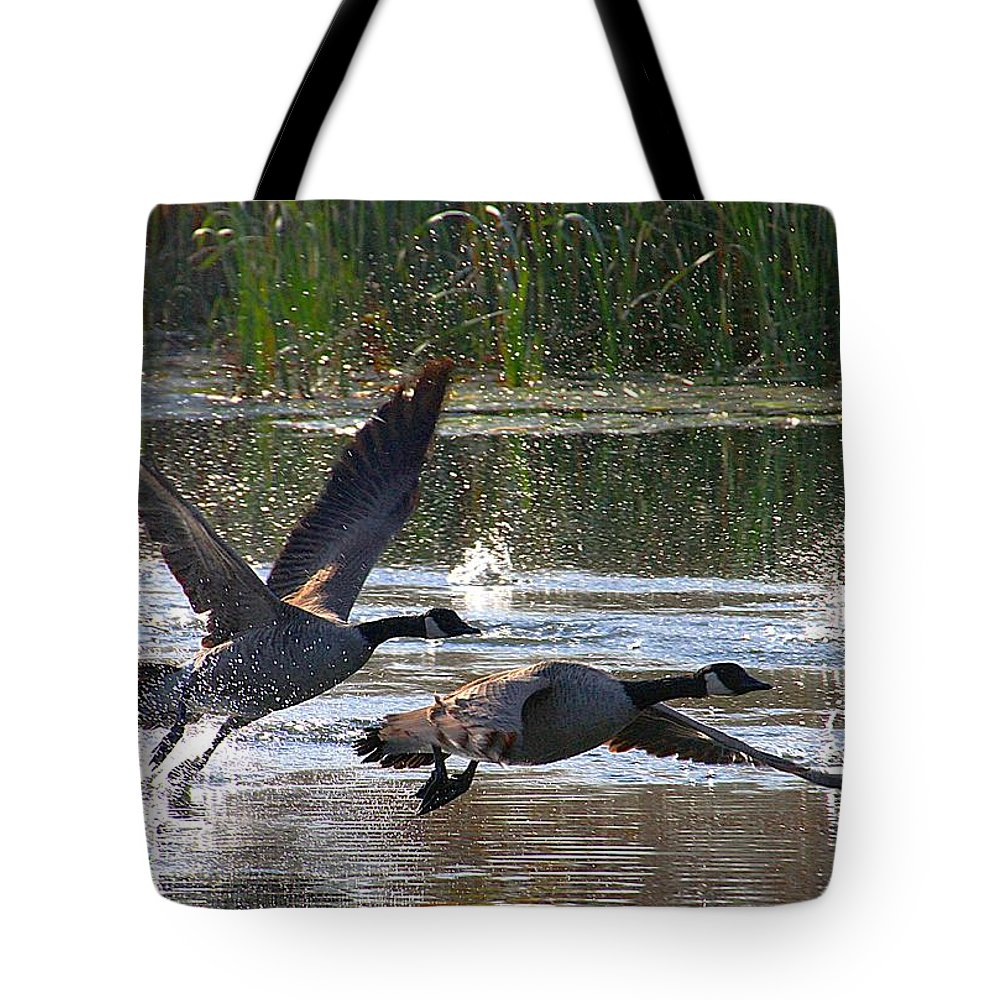 Canadian Geese Tote Bag featuring the photograph One Winged Flight by Elizabeth Winter