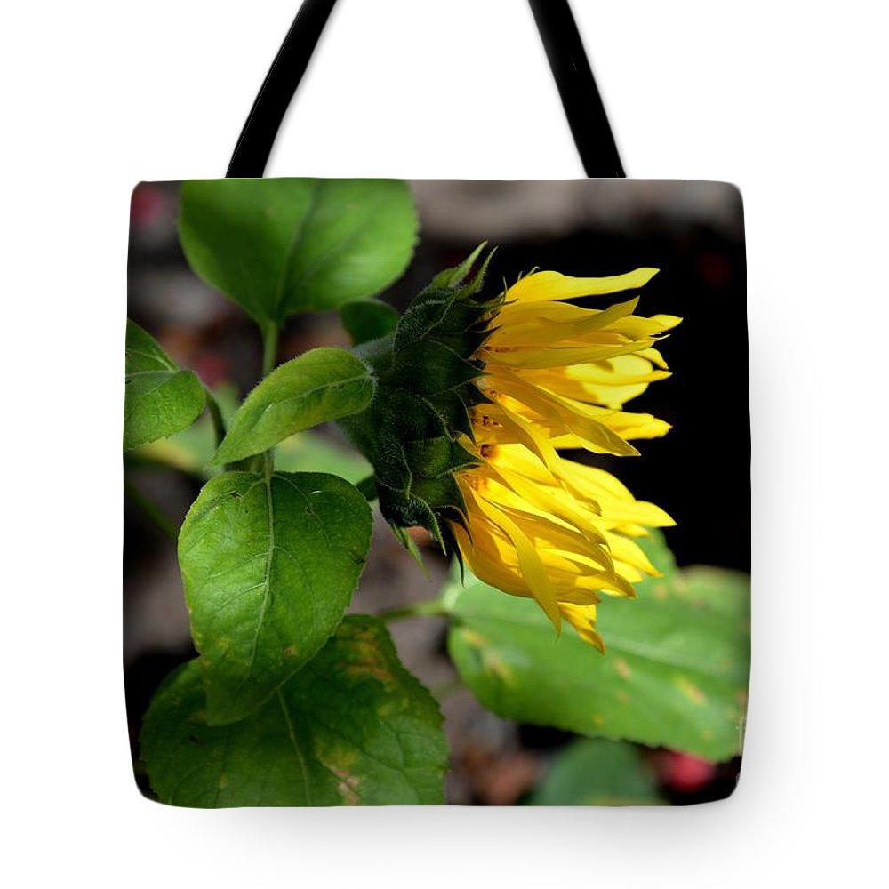 Onward Nature Sunflower Light Bright Garden Photography Art Galina Khlupina Art Tote Bag featuring the photograph Onward by Galina Khlupina