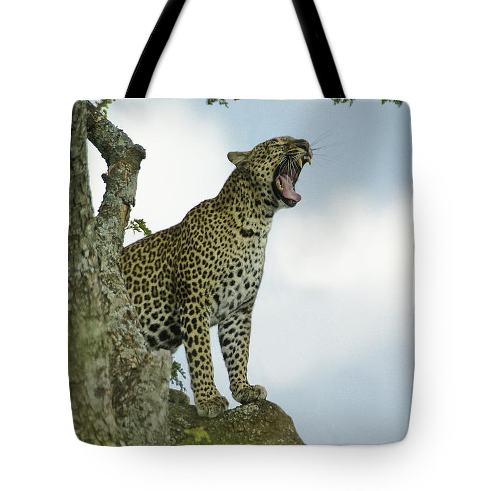 Africa Tote Bag featuring the photograph Open Wide by Michele Burgess
