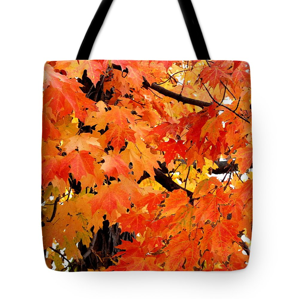Maple Tree Tote Bag featuring the photograph Orange And Reds And Some Yellow Too by Eunice Miller