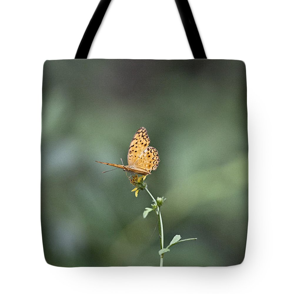 Orange Butterfly Tote Bag featuring the photograph Orange Butterfly V3 by Douglas Barnard