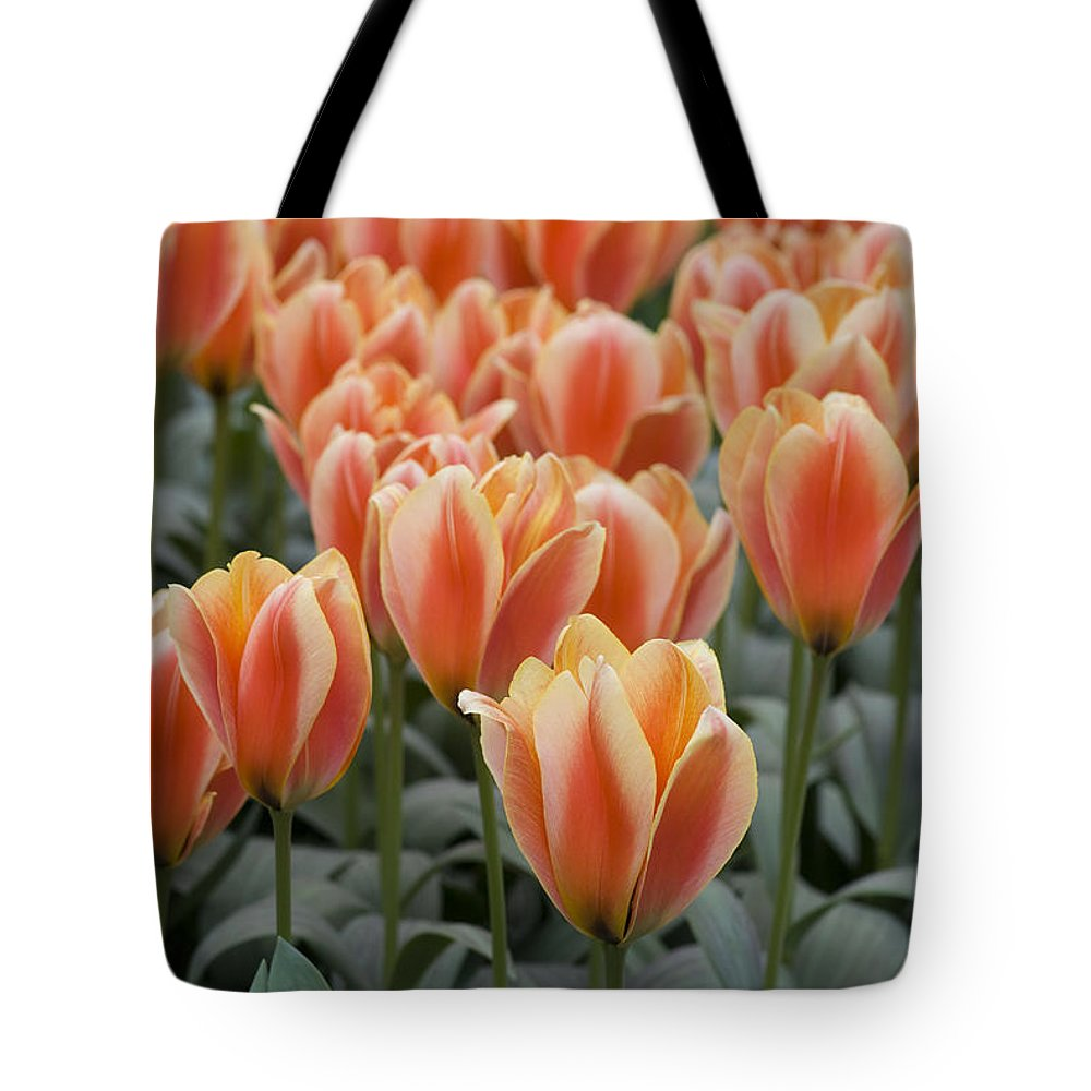 Bloom Tote Bag featuring the photograph Orange Dutch Tulips by Juli Scalzi