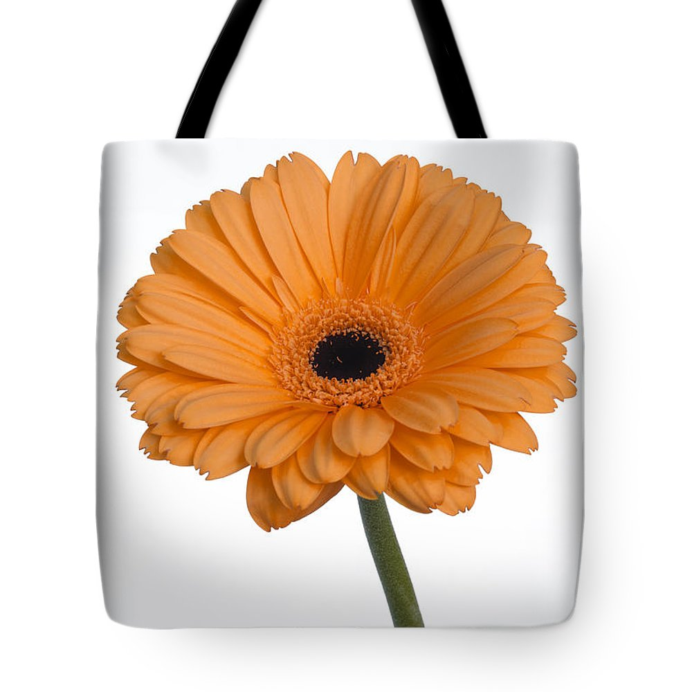 Flowers Tote Bag featuring the photograph Orange Gerbera Daisy by K Powers Photography