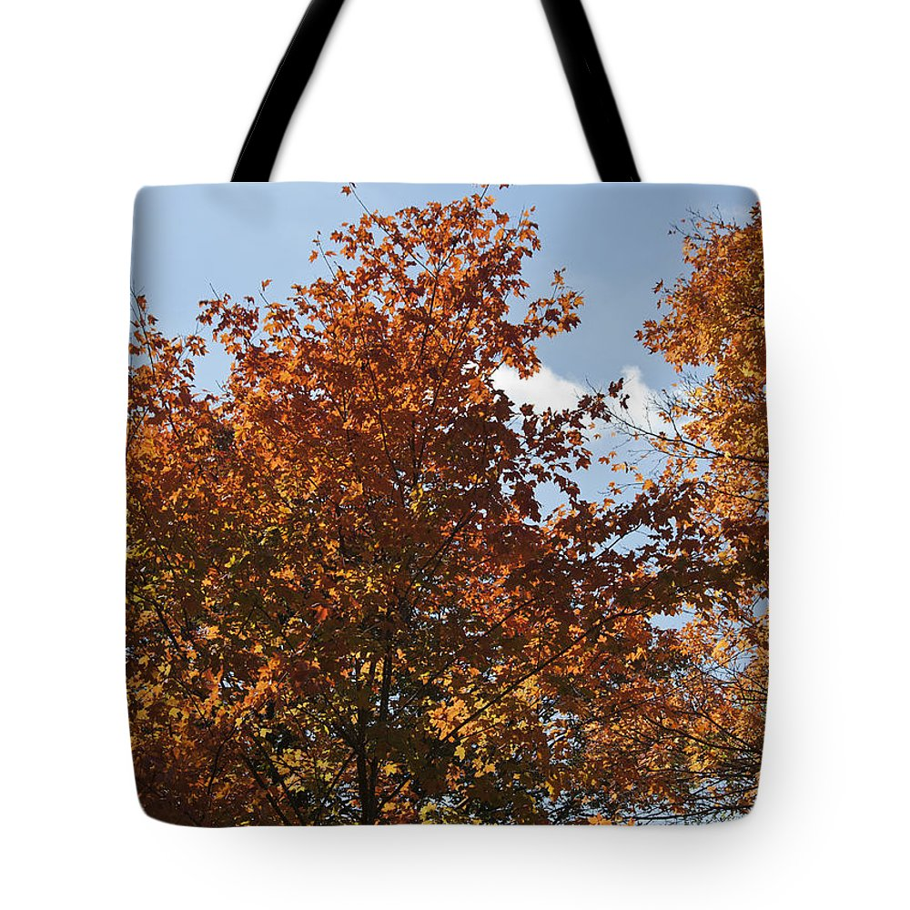 Fall Tote Bag featuring the photograph Orange Pop by Teresa Mucha