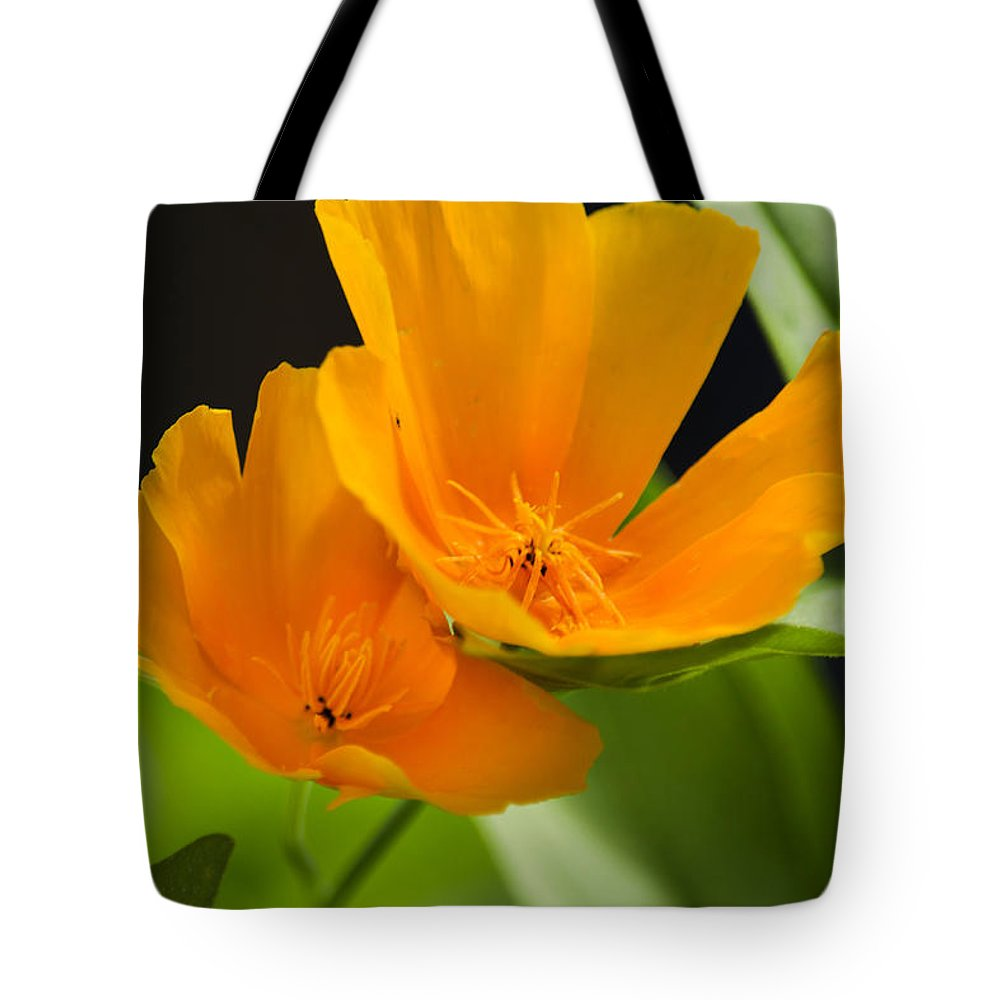 Orange Poppies Tote Bag featuring the photograph Orange Poppies by Christina Rollo