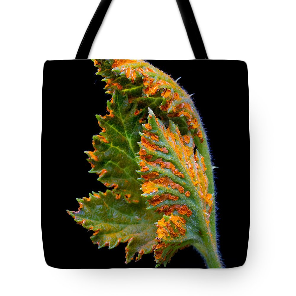 Rust Tote Bag featuring the photograph Orange Rust by Robert Woodward