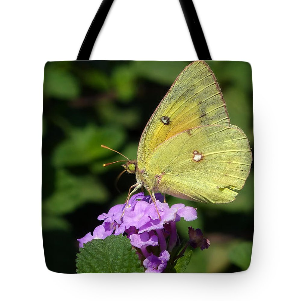 Orange Sulphur Tote Bag featuring the photograph Orange Sulphur by Randall Ingalls