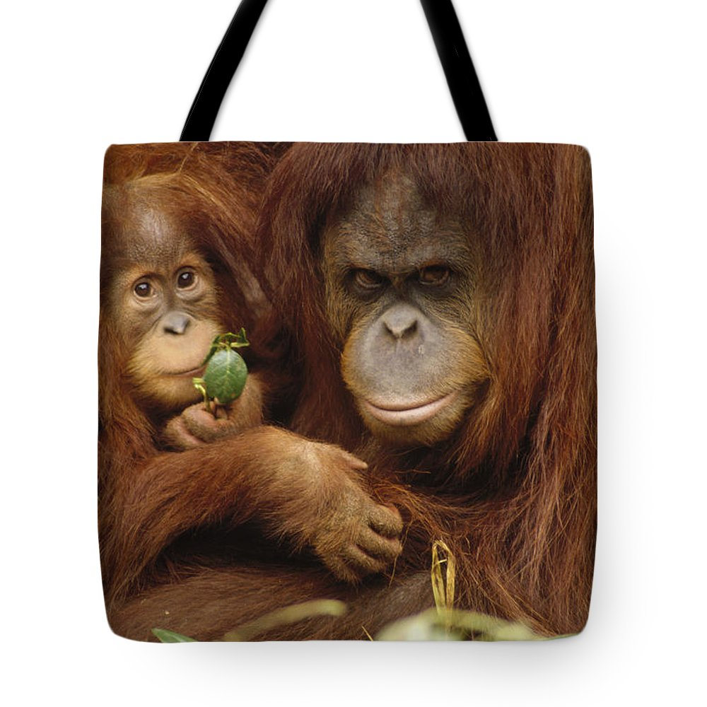 Baby Tote Bag featuring the photograph Orangutan Mother And Baby by Gerry Ellis