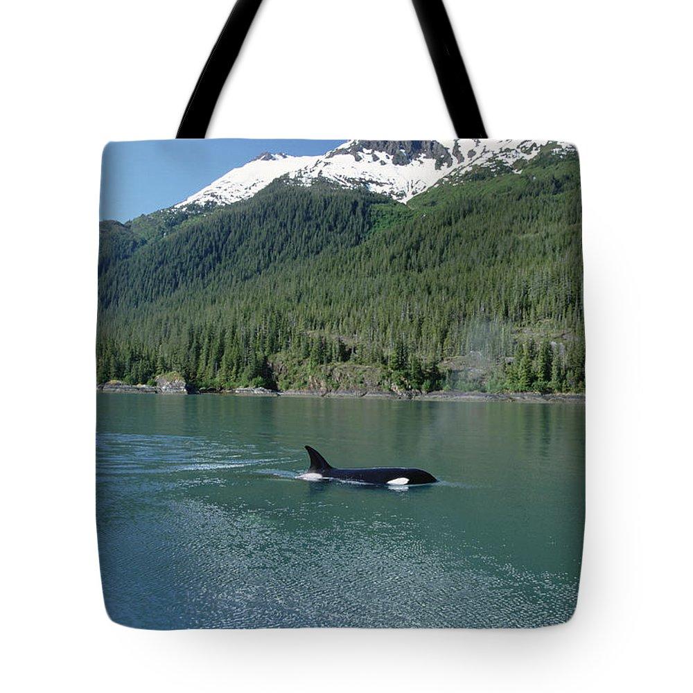 Alaska Tote Bag featuring the photograph Orca Female Inside Passage Alaska by Konrad Wothe