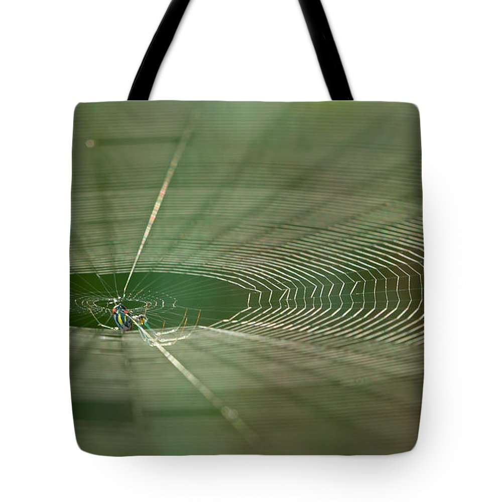 Spider Tote Bag featuring the photograph Orchard Orbweaver #2 by Paul Rebmann