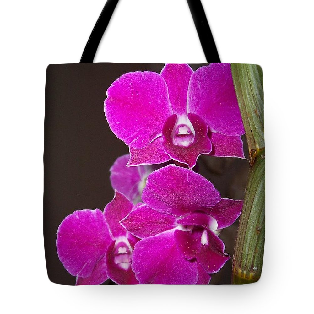 Orchid Tote Bag featuring the photograph Orchid Branch by Amy Porter