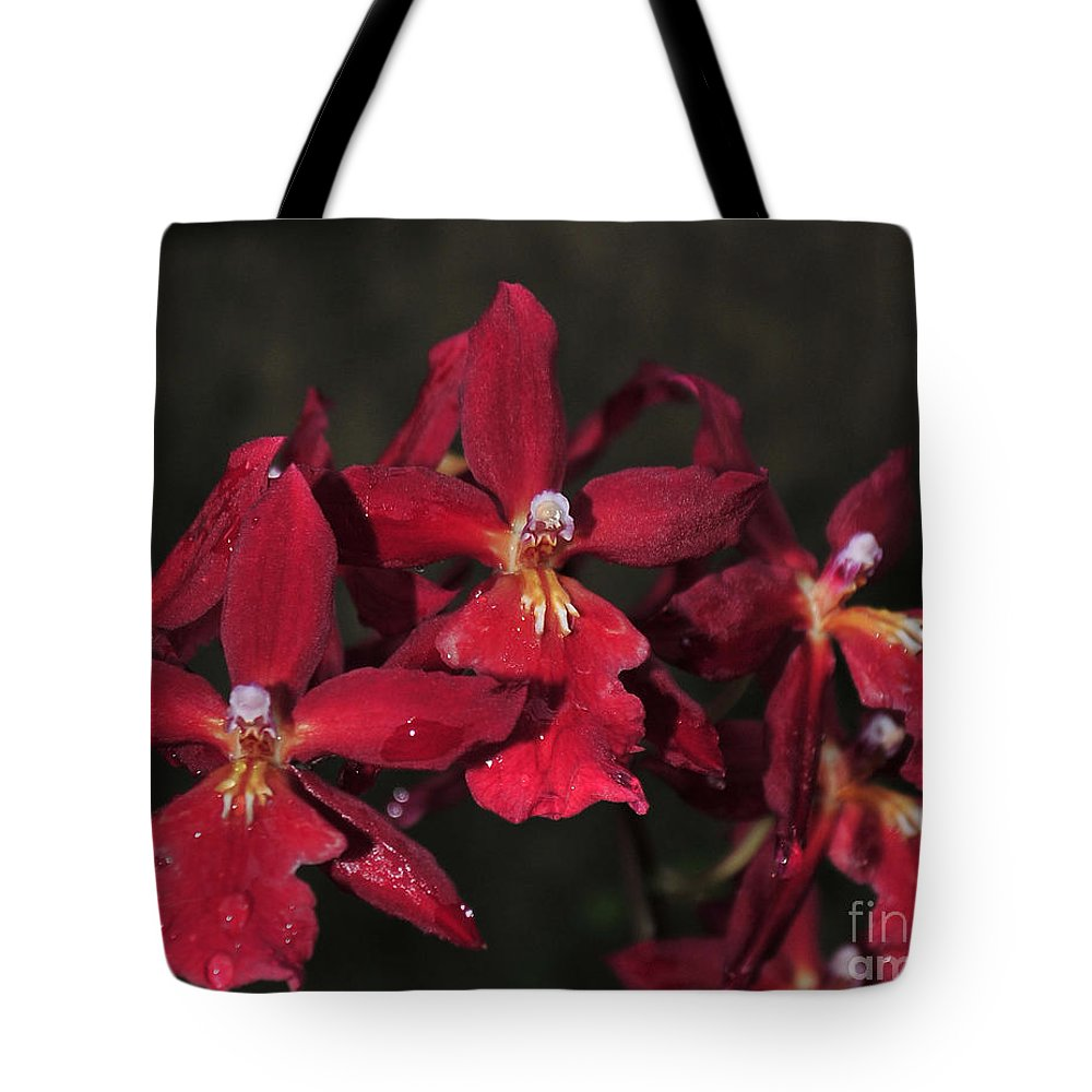 Red Orchid Tote Bag featuring the photograph Orchid Red Burrageara Living Fire Glowing Ember by Terri Winkler