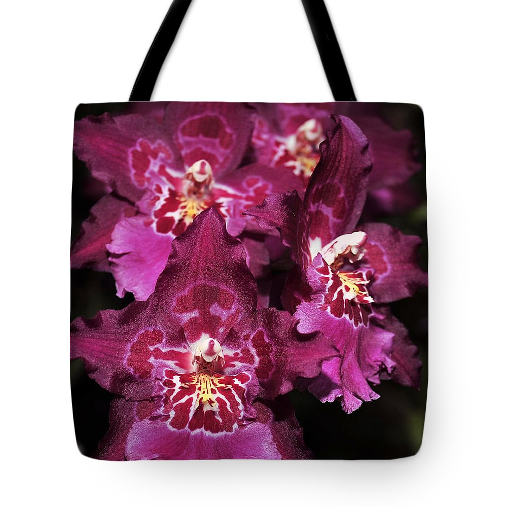 Pink Orchid Tote Bag featuring the photograph Orchid Vuylstekeara Aloha Passion by Terri Winkler